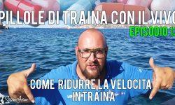 Come ridurre la velocità di traina, Traina con il vivo Traina con il vivo in pillole Stefano Adami Ep 13